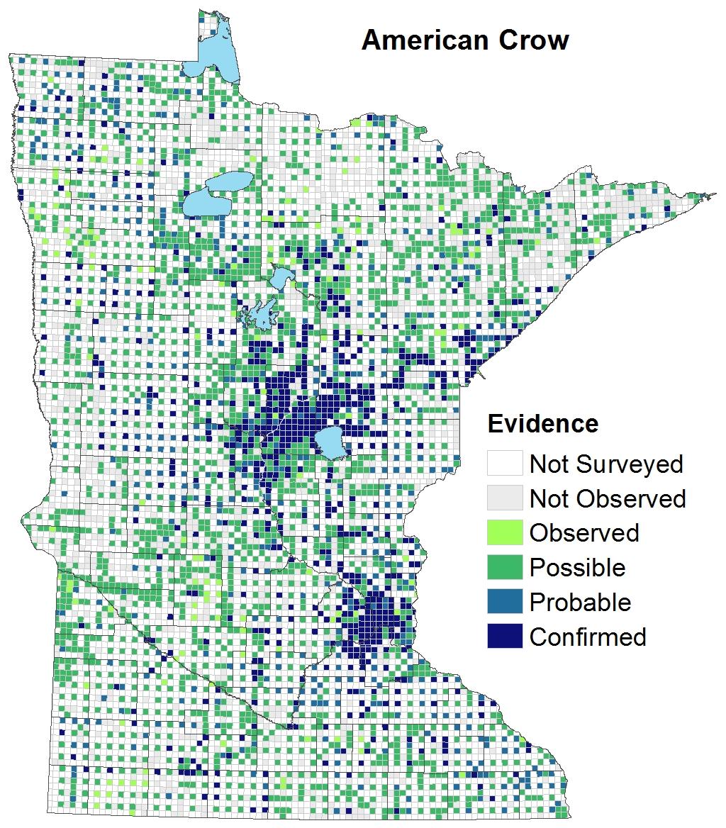 American Crow Minnesota Breeding Bird Atlas - Bird map of the us crows