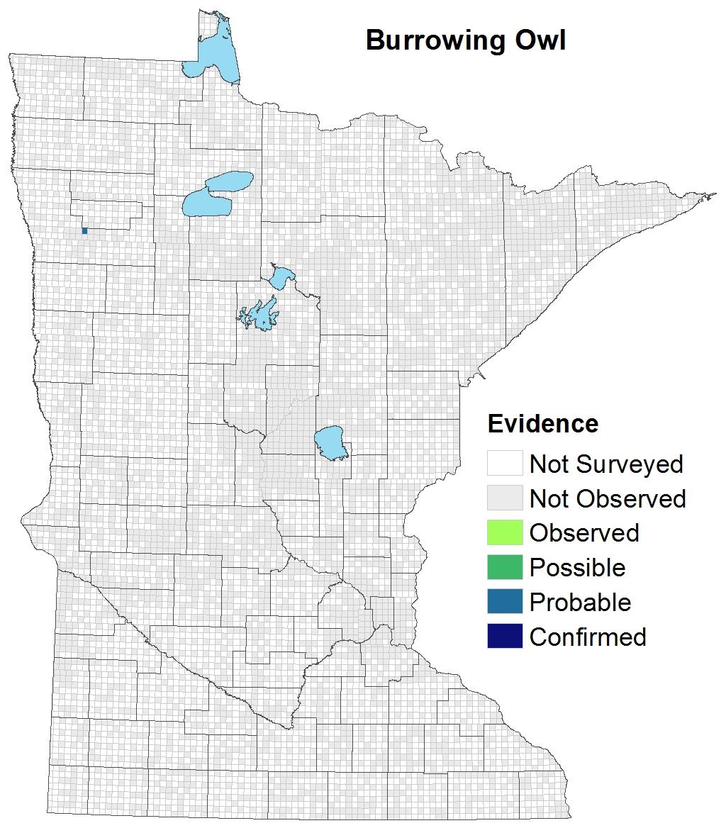 Burrowing Owl : Minnesota Breeding Bird Atlas