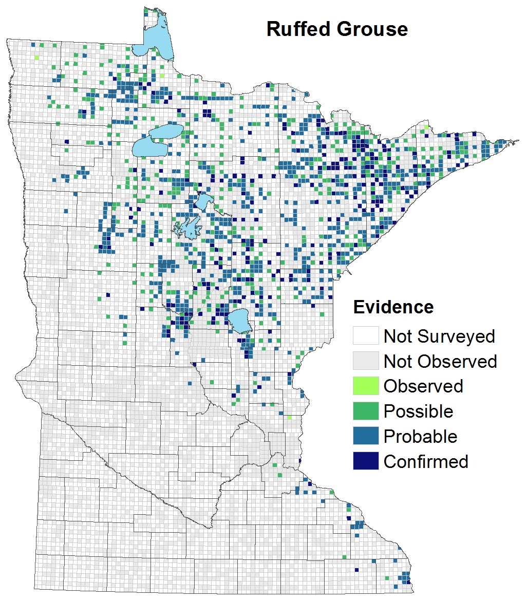 graphic about Printable Maps of Minnesota called Ruffed Grouse : Minnesota Breeding Fowl Atlas